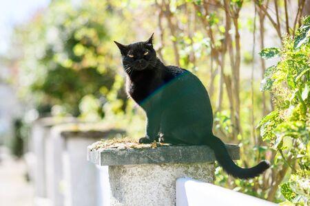 elegant black cat resting on a stone sunny weather - impressive yellow eyes