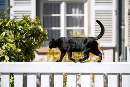 Side view of sweet young fit elegant black cat walking on a white fence sunny weather - house window in background