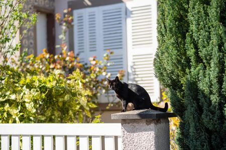 Cute beautiful cat resting on the stone fence detail on a sunny day