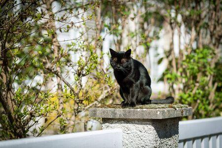 Beautiful elegant black cat resting on a stone sunny weather 版權商用圖片