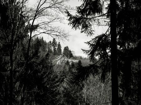 View through dark pine trees forest of a lonely house in the middle of nowhere