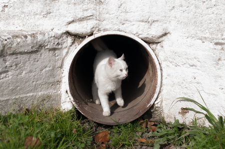 curios: Curios kitten in the tube Stock Photo
