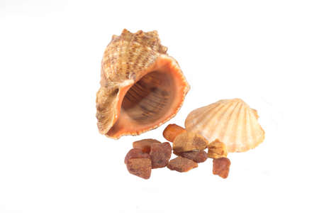 One big brown and one small brown sea shells and brown amber