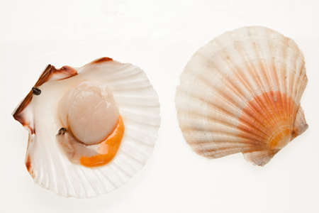 a scallop and his shell on white background