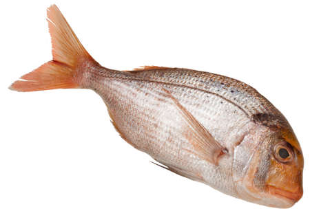 valuable snapper on white background