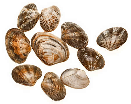 ten clams on a white background Stock fotó - 85119965