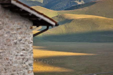 view from above of Piani di Castelluccio with grazing cows