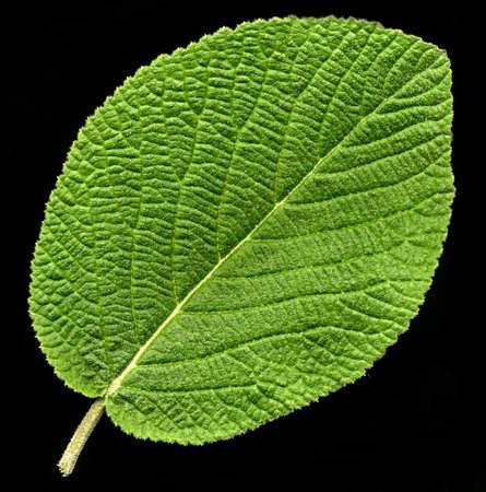 green leaf on black background 版權商用圖片