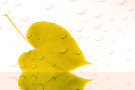 yellow leaf with drops of water