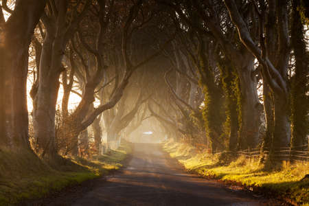 Dark Hedges Stockfoto - 30263560