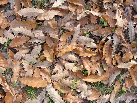 dead leaves: muerto oto�o hojas de alfombras