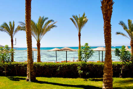 Holiday in Africa. Beach in Egypt near to hotel rooms. Palms, water.