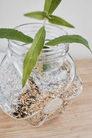 Digital currency physical silver Litecoin coin and green plant in glass jar with a seeds. Stock Photo