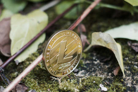 Digital currency physical gold litecoin coin in forest near plants and leafs.