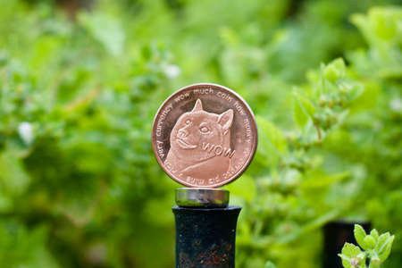 Digital currency physical brass dogecoin coin on green natural background.