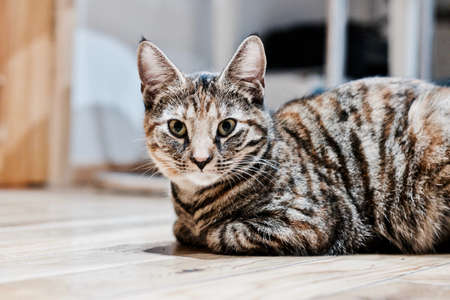 Animals concept. Young kitty on the wooden floor in house.