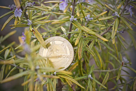Digital currency physical metal gold dogecoin coin. Cryptocurrency rosemary concept.