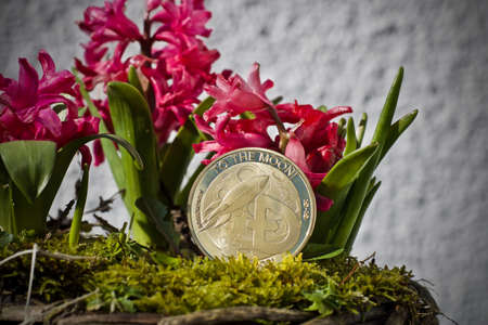 Digital currency physical metal dogecoin coin. Cryptocurrency flower concept. Stock Photo