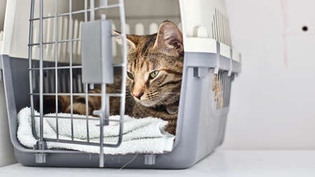 Young beautiful kitty in the transport cage.