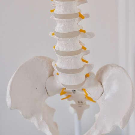 White human skeleton with yellow marks. Human anatomy concept.