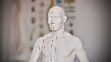 White medical training doll with marks and lines. Clinic concept. Stock Photo