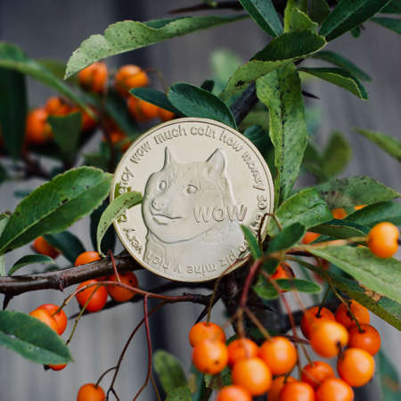 Digital currency physical metal dogecoin coin. Dogecoin tree outdoor concept.