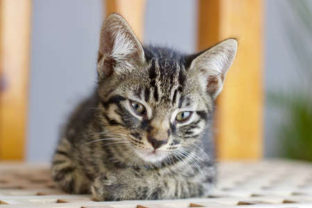 Beautiful small young cat. Home animal pet concept.