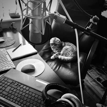 Big grey scottish fold cat. Home pet concept. Editorial