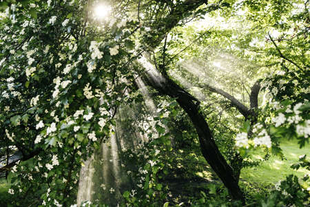 the suns rays and the rain forest