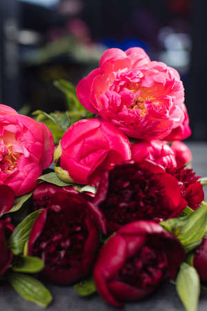 Beautiful bouquet of peonies red charm and coral. Flower delivery Stock Photo