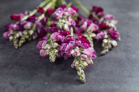 Beautiful bouquet of pink leutenbach. Flower delivery Stock Photo