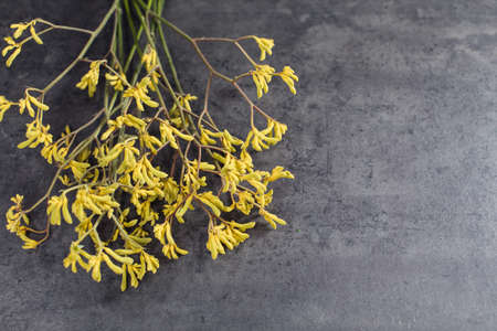 Beautiful bouquet of yellow anigozanthos. Flower delivery Stock Photo