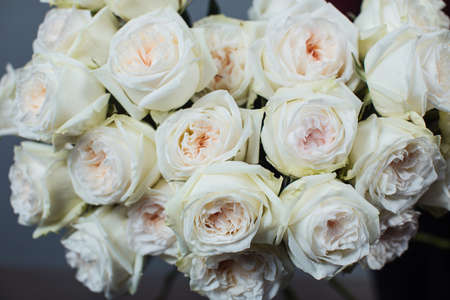 Close-up of white roses. A girl holding a rose. Flowers Stock Photo