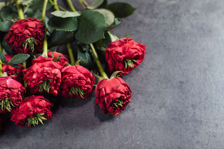 Close-up of red roses. A girl holding a rose. Flowers