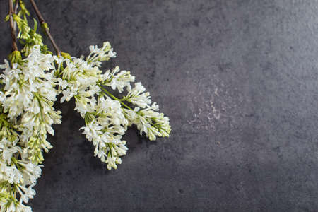 Beautiful bouquet of white lilac. Flower delivery