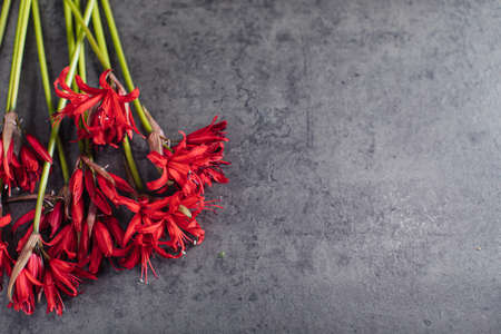 Beautiful bouquet of red nerine. Flower delivery Stock Photo