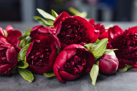 Beautiful bouquet of peonies red charm. Flower delivery Stock Photo