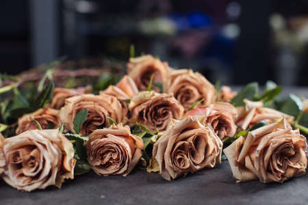 Close-up of orange and pink roses. A girl holding a rose. Flowers Stock Photo
