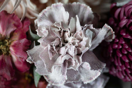 Close-up photo of a Carnation flower. Flower delivery