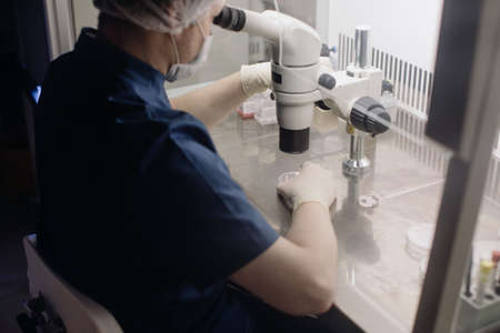 In a Modern Laboratory Scientist Conduct Experiments. Chief Research Scientist Adjusts Specimen in a Petri Dish and Looks on it Into Microscope