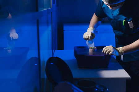 Specialist Embryologist Takes a capsule With Embryos from the Cryobank Banque d'images