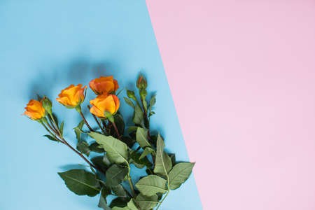 Beautiful roses on multicolored paper backgrounds with copy space. Spring, summer, flowers, color concept