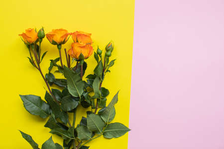 Beautiful roses on multicolored paper backgrounds with copy space. Spring, summer, flowers, color concept, women's day.