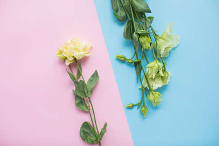 Beautiful eustoma on multicolored paper backgrounds with copy space. Spring, summer, flowers, color concept, women's day.
