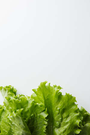 Salad and Basil on a white background. Minimum concept