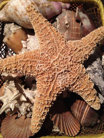 starfish on a basket with shells Stok Fotoğraf