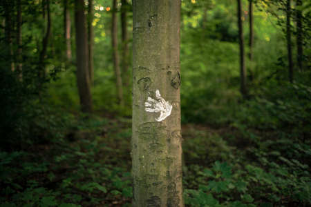 Handprint on a tree in the forest
