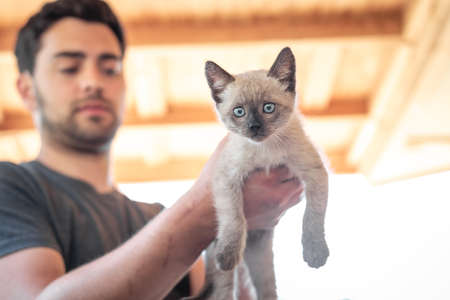 A young man holding a small, rescued feral kitten Imagens