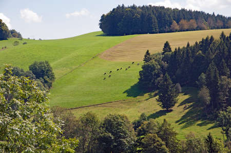Black Forest in Bavaria, Germany. Untouched nature with mountains, forests and deep-water lakes and enchanting countries. Landscapes in the Gutach area.