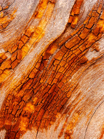 Detail of bark eroded by time, with textures and scratches on the surface that create a textured effect.